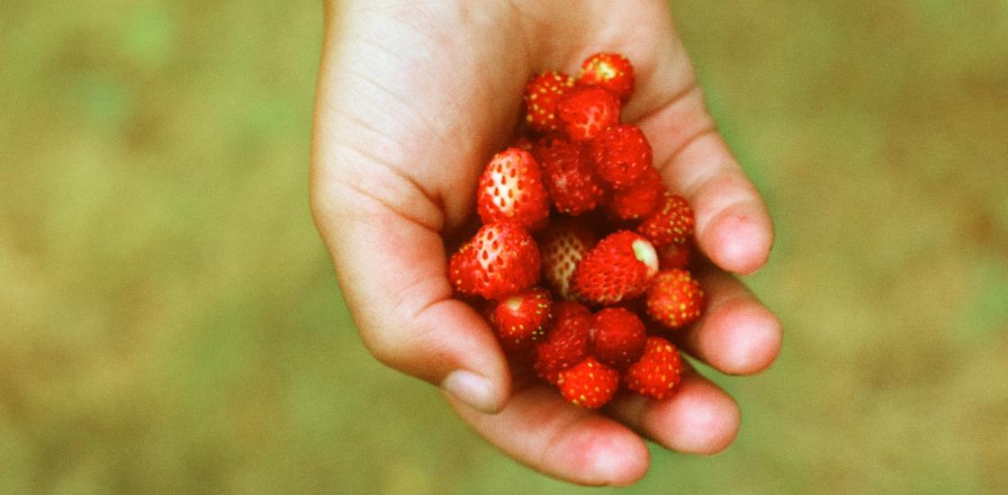 3 nõuannet edukalt maasikaettevõtjalt